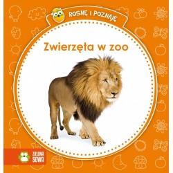 Zielona Sowa - 2811 - Książeczki dla Dzieci - Książeczka Edukacyjna - Rosnę i Poznaję - Zwierzęta w ZOO