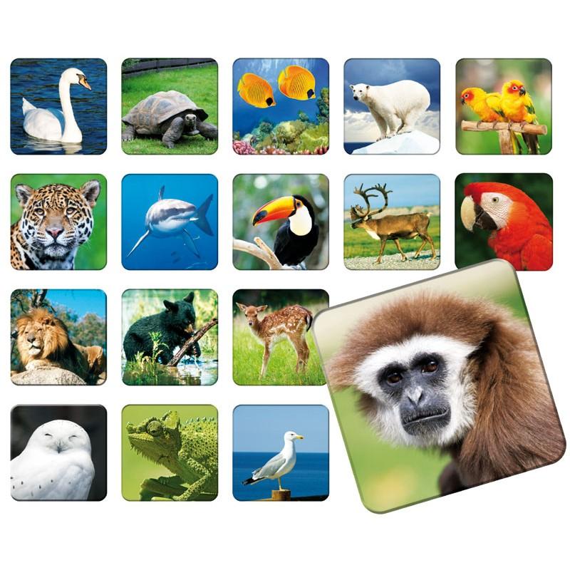 5cf1fa6201c094 ... ADAMIGO Gra Memory Prawdziwe Zwierzęta - MEMO ZOO 3051 ...